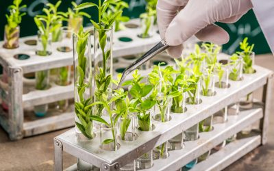 Innovations in Plant Breeding and Policy Development in The Netherlands